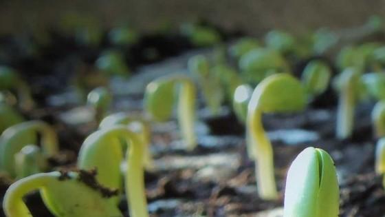 En Durazno se ha implantado entre el 60 y el 70% del área de soja — Agricultura — Dinámica Rural | El Espectador 810
