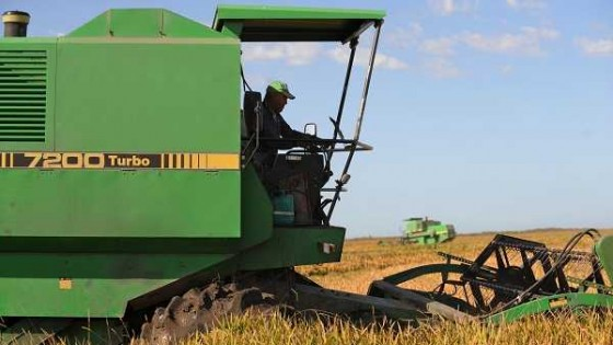 Con rindes por encima que la campaña pasada, hasta el momento se levantó el 30% del área de arroz — Agricultura — Dinámica Rural | El Espectador 810