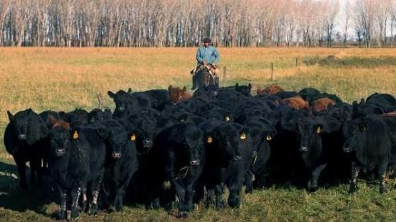 La falta de lluvias, el retiro de los equipos Kosher inciden en los precios de las haciendas  — Audios — Dinámica Rural | El Espectador 810