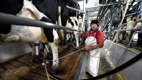 Según el INALE, más de 100 productores lecheros dejaron la actividad en lo que va de 2019 — Lechería — Dinámica Rural | El Espectador 810