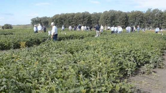 Es esperable que la soja 'alcance picos de 2.800 kgs por há — Agricultura — Dinámica Rural | El Espectador 810