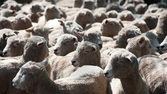 Previo a la primavera, es momento de prevenir las parasitosis en ovinos — Ganadería — Dinámica Rural | El Espectador 810
