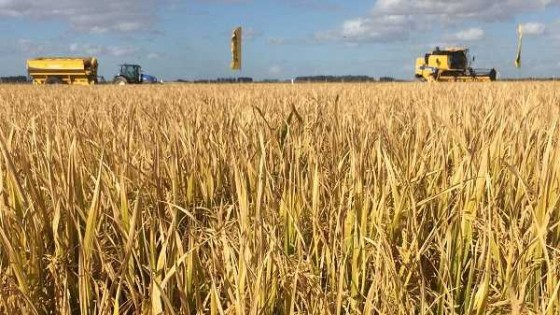 Tabaré Vázquez respondió a ACA sobre planteos realizados en mayo — Agricultura — Dinámica Rural | El Espectador 810