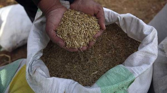ADP promueve nuevas variedades en trigo para la campaña 19/20  — Audios — Dinámica Rural | El Espectador 810