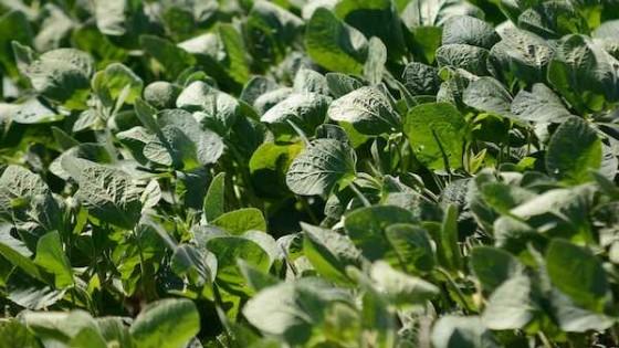 E. Uribe: A pesar de la volatilidad del mercado, si se logra buena producción, la soja 'sigue siendo' el negocio más rentable — Agricultura — Dinámica Rural | El Espectador 810