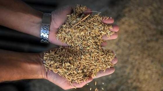 Tras intensas gestiones, el ministro Benech logró destrabar con México el cierre temporal para el arroz uruguayo — Agricultura — Dinámica Rural | El Espectador 810