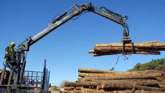 El sector forestal proyecta más y mejor crecimiento — Audios — Dinámica Rural | El Espectador 810