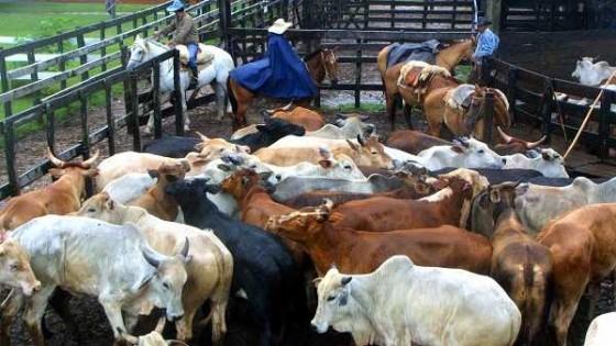 A Paraguay 'el consumidor le paga' con precios a la baja por no tener información más detallada de su ganadería — Ganadería — Dinámica Rural | El Espectador 810