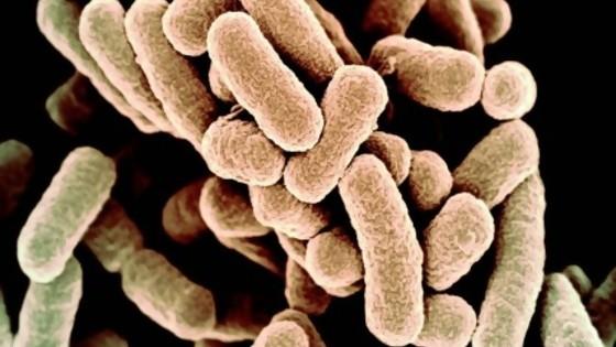 Una bacteria totalmente artificial: ¿estamos frente a una nueva forma de vida? — Gianfranco Grompone — No Toquen Nada | El Espectador 810