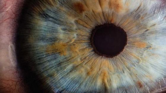 Ojos y miradas — Audios — Otro Elefante | El Espectador 810