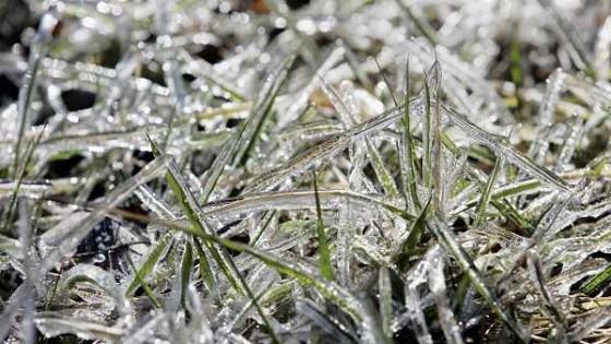 Ahora los productores podrán saber a través de una herramienta sobre cuándo se registrarán heladas — Agricultura — Dinámica Rural | El Espectador 810