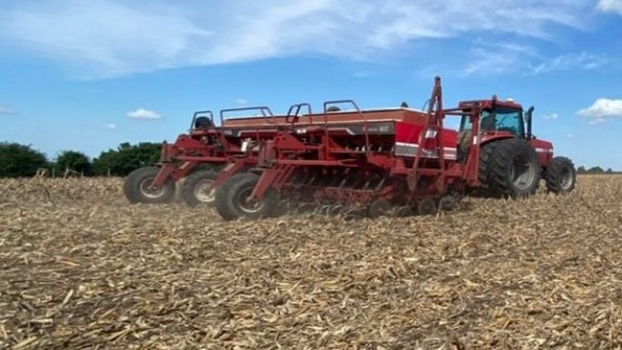 Comenzó la siembra de colza y se viene la trilla de soja — Agricultura — Dinámica Rural | El Espectador 810