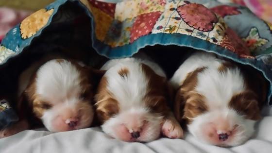 El cuidado de perros y gatos en sus primeros meses — Perros y gatos: curiosidades que no muerden — Bien Igual   El Espectador 810