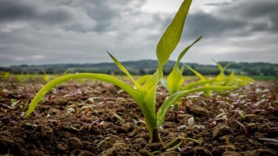J. L. Pérez: ''Son esperables registros pluviométricos por encima de los 80 milímetros'' — Clima — Dinámica Rural | El Espectador 810