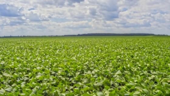 Soja: de expectativas de una gran cosecha a la certeza de una mala cosecha — Entrevistas — No Toquen Nada | El Espectador 810