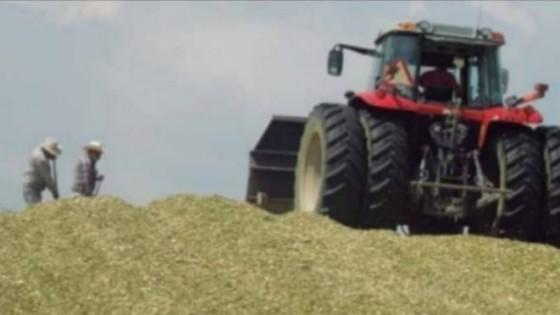 Prolesa: hasta el 30 promueve Plan para ensilaje — Lechería — Dinámica Rural | El Espectador 810