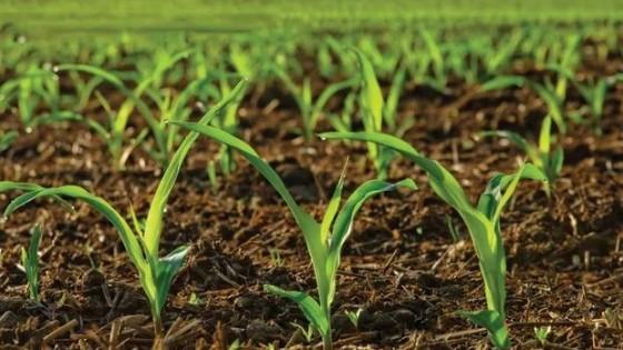 S. Da Silva: ''Cuidar el suelo es cuidar la producción del futuro'' — gremiales — Dinámica Rural | El Espectador 810