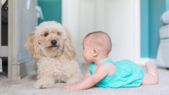 Mascotas y bebés — Perros y gatos: curiosidades que no muerden — Bien Igual   El Espectador 810
