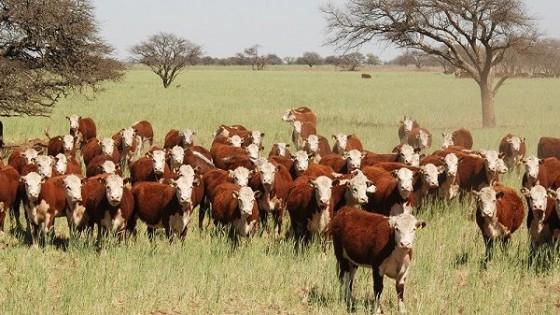 O. Fernández: ''Este es un remate donde el ganadero espera para comprar y reponer'' — Mercados — Dinámica Rural   El Espectador 810