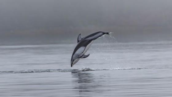 Juancho fue un delfín  — El mostrador — Bien Igual | El Espectador 810