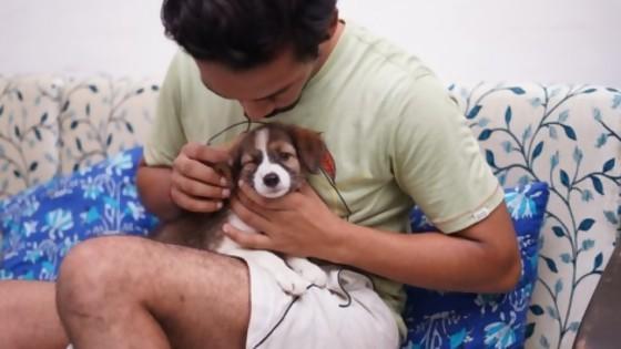 Tenencia responsable — Perros y gatos: curiosidades que no muerden — Bien Igual | El Espectador 810