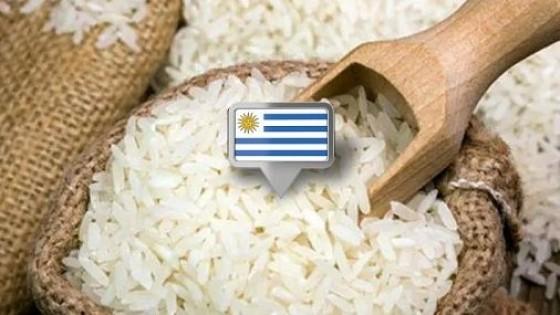 Uruguay logró habilitación de México — Agricultura — Dinámica Rural | El Espectador 810