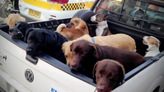 Perros: un minuto, mucha normativa y nada de control — MinutoNTN — No Toquen Nada | El Espectador 810