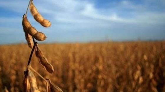 F. Morixe: ''El mercado de granos podría encontrar una nueva referencia de precios'' — Comercio Exterior — Dinámica Rural | El Espectador 810