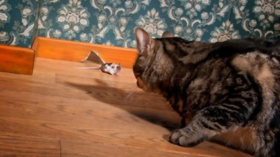 Domesticación e instinto animal — Perros y gatos: curiosidades que no muerden — Bien Igual   El Espectador 810