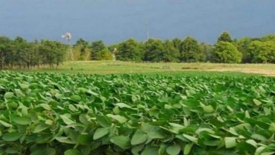 D. Dufour: ''Precios muy buenos, pero rindes magros, no es una buena ecuación'' — Agricultura — Dinámica Rural | El Espectador 810