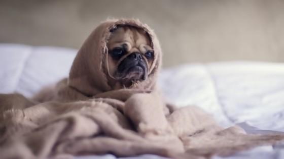 Rabia y otras enfermedades  que nos transmiten perros y gatos — Perros y gatos: curiosidades que no muerden — Bien Igual   El Espectador 810