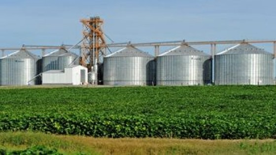 L. Olivera: ''En soja puede ser que Uruguay alcance los dos millones de toneladas'' — Agricultura — Dinámica Rural | El Espectador 810