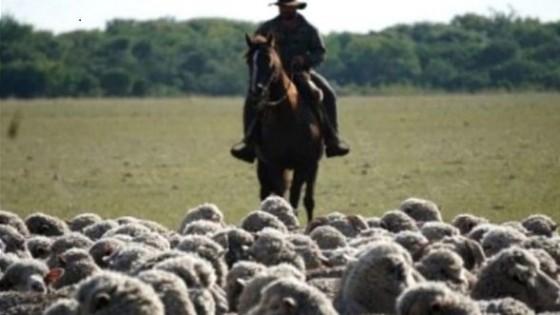 Se avanza en la exportación de ovinos entre Uruguay y Brasil — Ganadería — Dinámica Rural | El Espectador 810