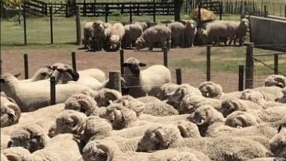 A. Echeverría: ''Vemos un escenario promisorio para el rubro ovino'' — Ganadería — Dinámica Rural | El Espectador 810