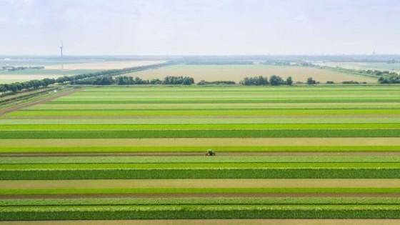 USDA: La soja ingresa en un mercado climático que definirá el precio a futuro — Comercio Exterior — Dinámica Rural | El Espectador 810