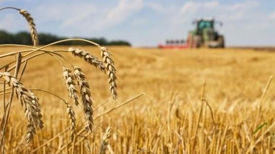 Cultivos: Avanza siembra de trigo en 70% y en cebada 50% — Agricultura — Dinámica Rural | El Espectador 810