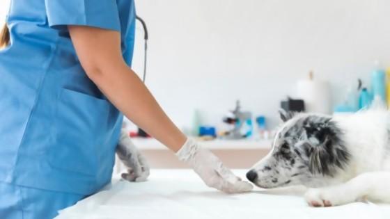 Medicación prohibida en las mascotas — Perros y gatos: curiosidades que no muerden — Bien Igual   El Espectador 810