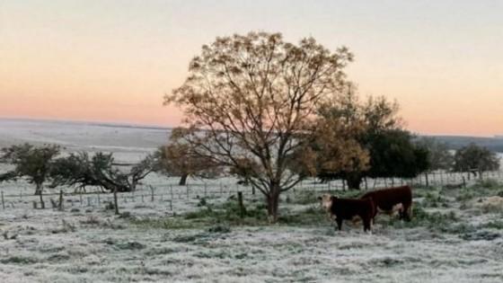 Mario Bidegain: ''Heladas, lluvias y tiempo estable hasta agosto'' — Clima — Dinámica Rural   El Espectador 810