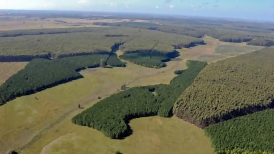 Proyecto de Ley Forestal aprobada en Diputados, ingresó a Comisión del Senado para su discusión — Qué tiene la tarde — Más Temprano Que Tarde | El Espectador 810