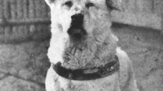 La historia de Hachikō, el perro fiel — ¡Qué animal! — Abran Cancha | El Espectador 810