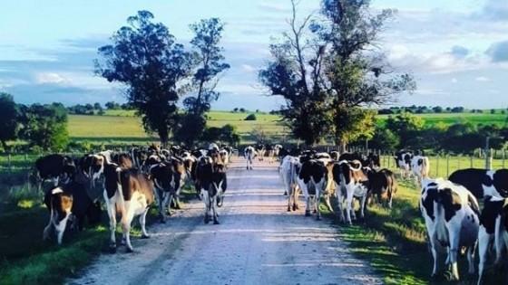El remate será en Local Cardal, este viernes 2 de julio, y comenzará a las 14hs — Lechería — Dinámica Rural   El Espectador 810