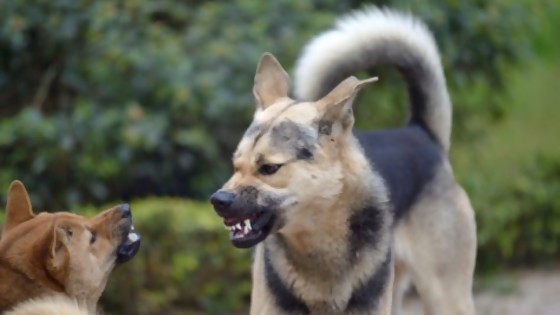 La agresividad entre perros que viven juntos — Perros y gatos: curiosidades que no muerden — Bien Igual   El Espectador 810