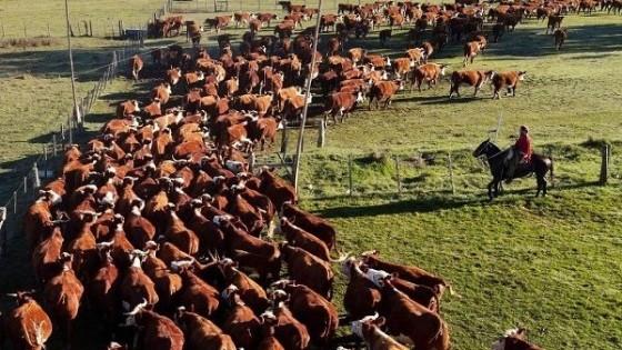 Expo Nacional: 25 cabañas, 209 ejemplares a calificar y 2.000 Hereford a venta — Exposiciones — Dinámica Rural | El Espectador 810