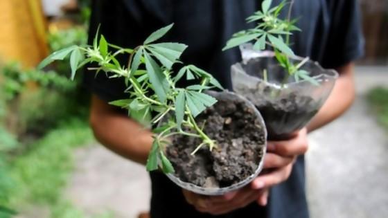 """Romani: """"La pregunta es por qué el gobierno quiere horadar el mercado regulado de cannabis"""" — La Entrevista — Más Temprano Que Tarde   El Espectador 810"""