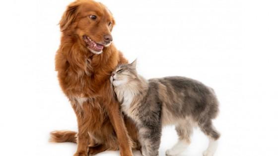 Lenguaje corporal de los animales — Perros y gatos: curiosidades que no muerden — Bien Igual   El Espectador 810