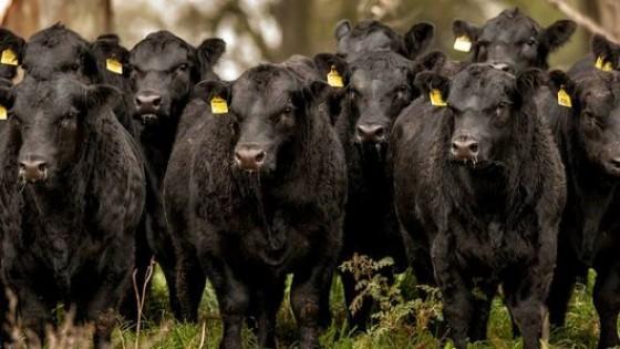 Recría 360: Nutrición, eficiencia reproductiva, valor del producto y economía — Ganadería — Dinámica Rural | El Espectador 810
