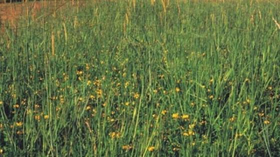 INIA promueve manejo por comunidad y ambiente del campo natural — Investigación — Dinámica Rural   El Espectador 810