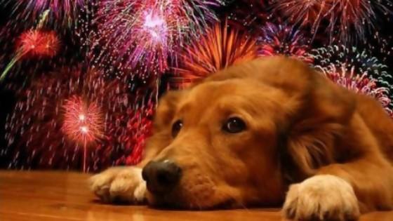 El sufrimiento de las mascotas — Perros y gatos: curiosidades que no muerden — Bien Igual   El Espectador 810
