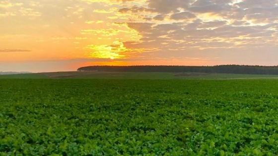 En los últimos 50 días las precipitaciones en algunas zonas fueron de cerca de 300 milímetros — Cultivos de invierno — Dinámica Rural   El Espectador 810