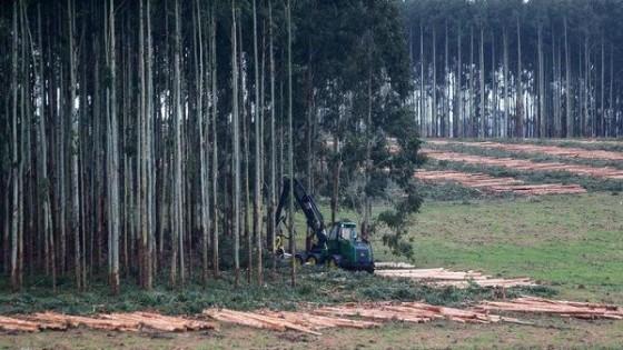 El Senado analiza la Ley 15.939, que intenta limitar el área forestal — Política — Dinámica Rural | El Espectador 810